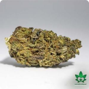 #99 Susz CBD Purple Haze 1g