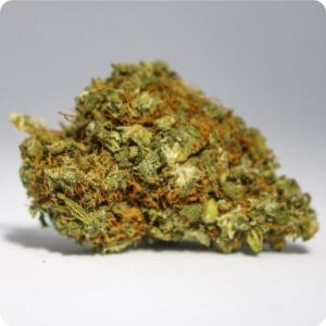 #98 Susz CBD Orange Bud 1g